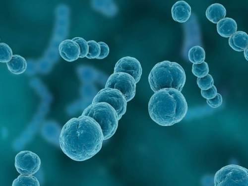 Стрептодермия на лице: лечение у ребенка и взрослого, причины, виды