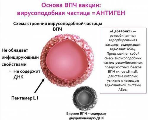 Действие вакцины от ВПЧ