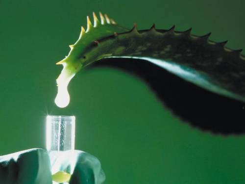 Жировики под кожей: причины, лечение подкожных жировиков народными средствами